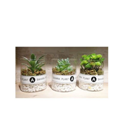 weay1431951-cactus-8x10cm