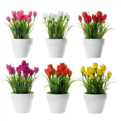 unim30449-planta-tulipan-stdo-6-colores-8x8x16cm